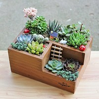 Chris-Wang Multifunctional 3-Compartment Wooden Desktop Office Supply Caddy/Pencil Holder/Desk Mail Organizer/Succulent Plants Planter(Classic Brown)