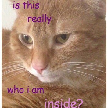 """Existential Thinking Cat """"is this really who i am inside"""" Matte Sticker 3"""" x 4"""" Comic Sans and Rounded Edges"""
