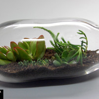 Large Hand Blown Glass Terrarium, Recycled Glass Terrarium, Succulent Garden Terrarium