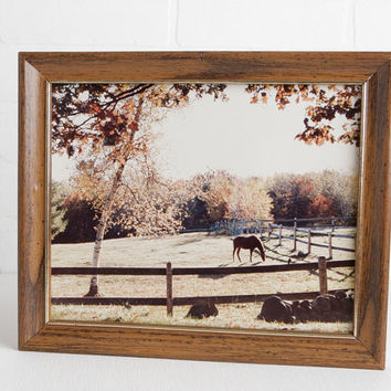 Vintage Horse in Field Photograph in Frame, Dark Horse in Fall Autumn Pasture with Wooden Fence and Birch Tree