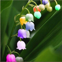 120 PCS Lily of the Valley Flower Seeds Bell Orchid Seeds Rich Aroma Bonsai Flower Seed Convallaria majalis