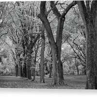 The Mall - Elm Trees Alley Central Park Canvas Print