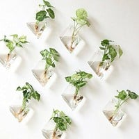 Hanging Glass Decorative Terrariums Planters