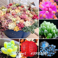 200/bag Mix Succulent seeds lotus Lithops Pseudotruncatella Bonsai plants Seeds for home & garden Flower pots planters