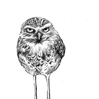 Burrowing Owl with Attitude - Pen and Ink Print, 5x7