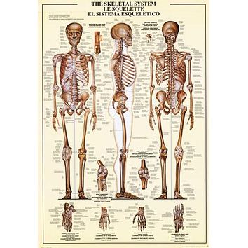 Skeletal System Education Poster 26x38