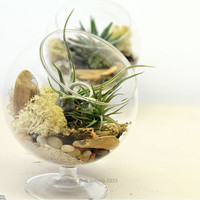 On Sale Air Plant Terrarium// Footed Glass Orb// Living Home Decor