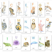 Animal Alphabet Flash Cards - 4 x 6 - Watercolor Animals - ABC - Watercolor Flash Cards - A-Z