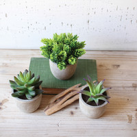 Set of 3 Small Artificial Succulents in Round Pots