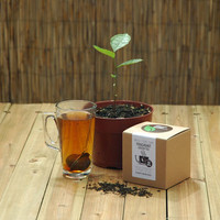 Grow Your Own Green Tea Plant
