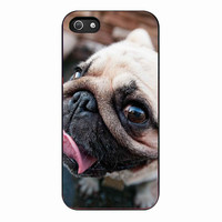 Pug Dog for iPhone 5S Case *01*