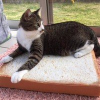 Toast bread Shape Fiber Cat Lounger Bed