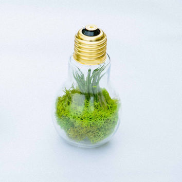Small Light Bulb Terrarium - Birthday Gift - Housewarming Gift - Wedding Favor - Hostess Gift - Terrarium Gift - Bridesmaids Gift