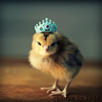 Greeting Card Set Chick in Crown Folded Photo Note Cards With Envelopes (4)