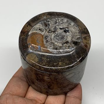 """223.3g, 2.2""""x2.4"""" Brown Fossils Ammonite Jewelry Box from Morocco, F2466"""
