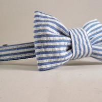 Cat Collar and Bow Tie or Flower - Blue Seersucker