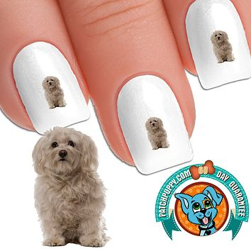 Havanese Mopsy - Nail Art (NOW 50% MORE FREE)