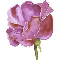 Purple Rose Watercolor Painting - 5 x 7 - Giclee Print - Floral
