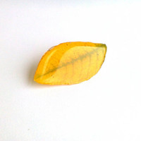 Yellow real Autumn leaf brooch. Clear resin jewelry