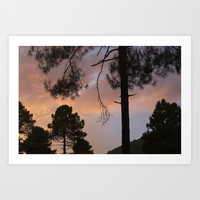 Sunset Through The Trees. Into The Woods. by