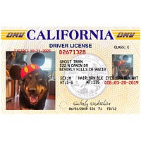 California Pet ID