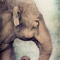The smiling Elephant Canvas Print by Pauline Fowler ( Polly470 )