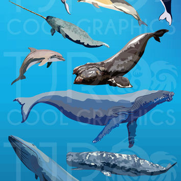 Whales and Dolphins Digital Clip Art