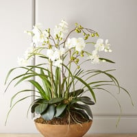 Faux Moth Orchid in Planter - Neiman Marcus